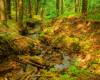 Jeden z licznych bieszczadzkich potoków przepływający obok szlaku czerwonego prowadzącego do rezerwatu Zwiezło, gdzie znajdują się Jeziorka Duszatyńskie. Zdjęcie wykonane na wycieczce jednodniowej Traperska Przygoda po Bieszczadach.