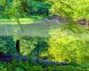 Do dzisiejszych czasów przetrwały 2 Jeziorka Duszatyńskie. Na zdjęciu wykonanym wiosną tzw. dolne Jeziorko Duszatyńskie. To jedna z głównych atrakcji wycieczki jednodniowej w Bieszczadach Traperska Przygoda.