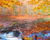 Dolne Jeziorko Duszatyńskie jesienią. Zdjęcie wykonane na wycieczce jednodniowej po Bieszczadach Traperska Przygoda.
