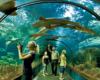 Osoby jadące na wycieczkę jednodniową do Sosto Furdo / Sóstófürdő mają duży dylemat... Mają do wyboru 2 super atrakcje: V pod względem wielkości baseny termalne lub największy na Węgrzech ogród zoologiczny na Węgrzech! A na nim oceanarium z tunelem, nad którym pływają ryby...