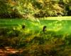 Kikuty drzew wystające z wody dolnego Jeziorka Duszatyńskiego objęte ochroną rezerwatem przyrody Zwiezło. Jeziorka Duszatyńskie powstały w wyniku największego osuwiska ziemi w Karpatach pod względem ilości przeniesionego materiału ziemno skalnego w 1907 roku.
