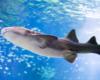 Rekin dosłownie nad głową dzięki tunelowi w oceanarium ZOO w Sosto Furdo / Sóstófürdő. Takie atrakcje na wycieczce jednodniowej na Węgry...