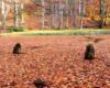 Dolne Jeziorko Duszatyńskie przykryte naturalną kołdrą z liści bieszczadzkich buków... Zdjęcie wykonaliśmy w listopadzie, czyli już po sezonie turystycznym w Bieszczadach. Czyż nie jest pięknie?