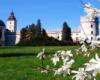 Magnolie kwitnące wiosną w parku obok zamku w Krasiczynie. To obowiązkowa atrakcja podczas wycieczki jednodniowej po Pogórzu Przemyskim.