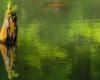 Jedno z drzew, które znalazło się pod wodą w wyniku największego osuwiska ziemi w Karpatach w 1907 roku. To już ponad 100 lat, a takie atrakcje w okolicach Komańczy można zobaczyć... Zapraszamy na wycieczkę jednodniową Traperska Przygoda po dzikich zakątkach Bieszczad!