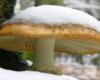 To zdjęcie wykonaliśmy 8 października 2011 roku. Wtedy w Bieszczadach niespodziewanie sypnął śnieg i złamał wiele jeszcze wtedy zielonych gałęzi drzew...
