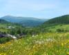 Ukwiecone łąki wychodząc na wycieczkę górską na Pikuj z miejscowości Husne Wyżne. Schodzimy niemal zawsze do Biłasowicy. A wszystko podczas wycieczki jednodniowej.