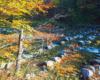 Niepowtarzalne progi skalne w rezerwacie przyrody Łokieć w Duszatynie. Poza wycieczką na Jeziorka Duszatyńskie warto znaleźć troszkę sił, by po 500 metrach od zakrętu w Duszatynie dotrzeć do tej atrakcji...