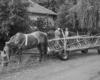 Wóz drabiniasty ciągnięty przez konia to najczęściej spotykany transport w Bieszczadach ukraińskich w okolicach Pikuja ;-)
