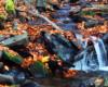 Jeden z bieszczadzkich potoków jesienią. Zdjęcie wykonane na szlaku prowadzącym do Jeziorek Duszatyńskich, podczas wycieczki jednodniowej Traperska Przygoda w Bieszczadach.