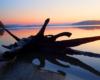 Korzeń na brzegu Zalewu Solińskiego w promieniach Zachodzącego Słońca. W takiej scenerii kończy się 2 godzinny rejs statkiem na wycieczce jednodniowej Wodami Rzeki San.