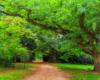 W rodzinie Sapiechów była taka tradycja, że jak rodził się syn sadzono dęba, a jak córka lipę. Zachęcamy podczas wycieczki po parku obok zamku w Krasiczynie zwrócić uwagę, których zabytkowych drzew jest więcej... ;-)
