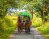 Dyliżansami używanymi przez Biuro Podróży Bieszczader można podróżować po Bieszczadach niezależnie od pogody, gdyż wozy posiadają nieprzemakalne plandeki z przeźroczystymi okienkami po bokach.