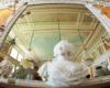 Duża sala koncertowa w odbiciu lustrzanym wewnątrz Zamku w Łańcucie. To reprezentacyjna sala zamku, gdzie odbywają się liczne koncerty muzyki poważnej.
