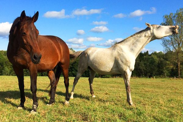 Bieszczady konie - Ośrodek Jeździecki Tarpan, Wysoczany