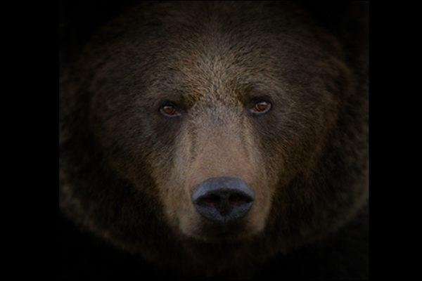 Dzikie Bieszczady - portal Damiana Olawskiego z niepowtarzalnymi zdjęciami głównie zwierząt z Bieszczad