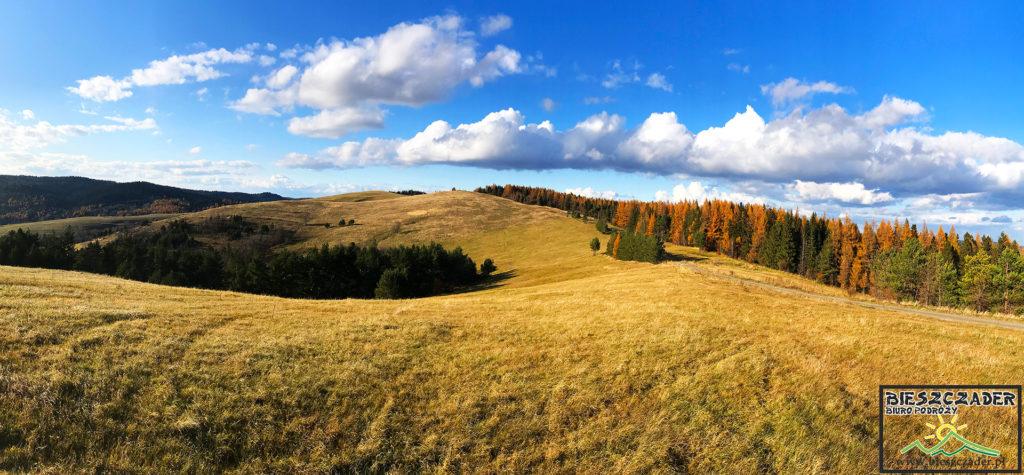 Góra RZEPEDKA na pograniczu Bieszczad i Beskidu Niskiego - pomysł na wycieczkę z psem z niepowtarzalnymi widokami.