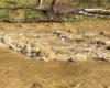 Wody rzeki Osława po intensywnych opadach deszczu wyglądają jak obraz namalowany przez artystę... Taka sceneria na pograniczu Bieszczadów i Beskidu Niskiego.