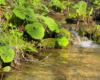 Jeden z małych potoczków będący dopływem rzeki Osława. Jest to druga pod względem wielkości rzeka w Bieszczadach.
