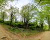 Las bukowy przy szlaku prowadzącym z Mucznego na Bukowego Berdo - tak piękne widoki podczas wycieczki po Bieszczadzkim Parku Narodowym.