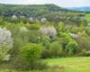 Kolory wiosny na pograniczu Bieszczad i Beskidu Niskiego... To doskonały czas na wycieczki jednodniowe.