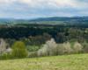 Drzewa kwitnące wiosną nad brzegami rzeki Osława. Widok z Morochowa w stronę Czaszyna, Brzozowca, Tarnawy, a na horyzoncie bieszczadzkich połonin, gdzie większość turystów wybiera się na wycieczki, a nie wiedząc, że tu jest równie pięknie i bliżej ;-)