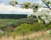 Kwitnące wiosną drzewa owocowe i drewniana cerkiew w Morochowie, czyli miejscowości położonej na granicy Bieszczad i Beskidu Niskiego.