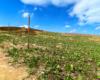 Oznaczenia szlaków w Bieszczadzkim Parku Narodowym - ten prowadzący z Mucznego na Bukowe Berdo. Te zielone roślinki to szczaw alpejski.