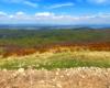 Kolory wiosny w Bieszczadzkim Parku Narodowym sfotografowane podczas wycieczki jednodniowej górskiej na Bukowe Berdo z Mucznego.