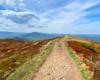 Na szlaku prowadzącym przez Bukowe Berdo nie ma schodów, drutów i barierek z taśm z napisem Bieszczadzki Park Narodowy, które naszym zdaniem ograniczają wolność i psują widoki... ;-)