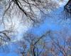 W koronach buków na Bukowym Berdzie w Bieszczadzkim Parku Narodowym.