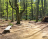 Ławeczka przy szlaku prowadzącym z Mucznego na Bukowe Berdo - czy ktoś z Was nie chciałbym po prostu usiąść i odpocząć w takim zakątku Bieszczad?...
