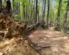 W tym miejscu wiatr wyrwał świerka z korzeniami - to drzewa sztucznie posadzone w Bieszczadach i nie pasujące do tego klimatu.