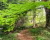 Magiczne miejsca przy szlaku prowadzącym z Mucznego na Bukowe Berdo - buki są drzewami dominującymi w lasach Województwa Podkarpackiego.