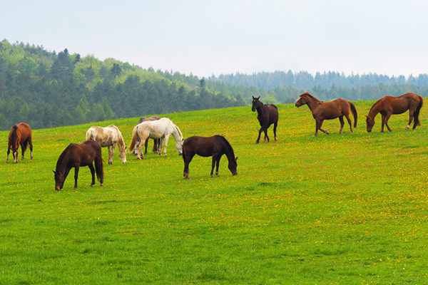 Konie po raz pierwszy na pastwisku na granicy Bieszczad i Beskidu Niskiego - Ośrodek Jeździecki Tarpan, Wysoczany i radość :-)