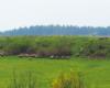 Owce na wzgórzu na pastwisku na granicy Bieszczad i Beskidu Niskiego - Wysoczany Ośrodek Jeździecki Tarpan.