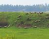 Owce wysokogórskie ;-) Zdjęcie wykonaliśmy w Wysoczanach w stadninie koni Tarpan, czyli na pograniczu Bieszczad i Beskidu Niskiego.