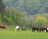 Jeśli ktoś z Was szuka najlepszego miejsca do nauki jazdy na koniach to polecamy stadninę koni w Wysoczanach, która jest pięknie położona - zarówno w Beskidzie Niskim, jak i w Bieszczadach.