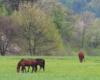 Wiosna i konie w stadninie koni Tarpan w Wysoczanach. Zachęcamy do rozpoczęcia nauki jazdy konnej w tym przepięknym miejscu na pograniczu Bieszczadów i Beskidu Niskiego.