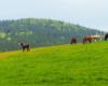 Konie w Ośrodku Jeździeckim Tarpan na pastwisku nr 1 - zdjęcie wykonane na granicy Bieszczad i Beskidu Niskiego.