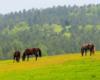 Konie i piękno Bieszczad oraz Beskidu Niskiego wiosną. To niepowtarzalna atrakcja Województwa Podkarpackiego.
