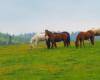 Czy ktoś z Was wybierających się na wypoczynek w Województwie Podkarpackim nie chciałbym pojeździć na koniach? Zdjęcie wykonane w Ośrodku Jeździeckim Tarpan w Wysoczanach.