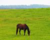 Pierwsze konie na świerzej wiosennej trawie. Kształty gór na pograniczu Bieszczad i Beskidu Niskiego.