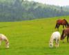 Konie w Ośrodku Jeździeckim Tarpan w Wysoczanach. Zachęcamy do indywidualnej wycieczki jednodniowej na pogranicze Bieszczad i Beskidu Niskiego.