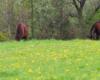Najstarsze konie pasące się na osobności w Ośrodku Jeździeckim Tarpan w Wysoczanach.