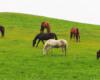 Na takich konikach warto się wybrać na wycieczkę w teren. Ośrodek Jeździecki Tarpan jest tak pięknie położony, że można zorganizować krótki rajd zarówno w Beskid Niski, jak i w Bieszczady.