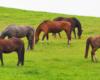 Wiele osób uważa konie za najpiękniejsze zwierzęta na świecie. Tak piękne koniki spotkacie wybierając się na wycieczkę na pogranicze Bieszczad i Beskidu Niskiego.