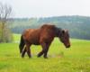 Konie w Ośrodku Jeździeckim Tarpan mogą się czuć jak na wolności, ale jedzenia im nie brakuje przez cały rok. Zapraszamy na jazdy konne.
