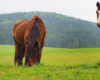 Szczęśliwe konie w Ośrodku Jeździeckim Tarpan. Zapraszamy na wycieczki na pogranicze Bieszczad i Beskidu Niskiego.