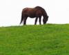 Pozostaje nam Was zaprosić na wycieczki na pogranicze Bieszczadów i Beskidu Niskiego, gdzie w wielu miejscach można spotkać najpiękniejsze atrakcje - konie :-)